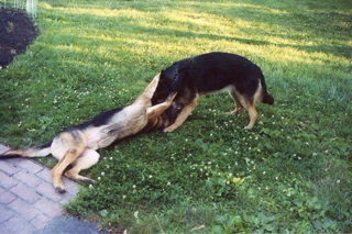 Image of Maggie and Major playing.